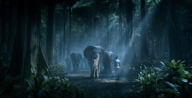 TRZN-Elephants