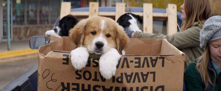 dogspurpose0010