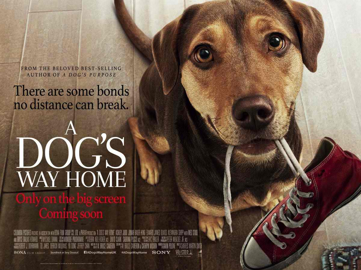 dogs_way_home_ver2_xlg