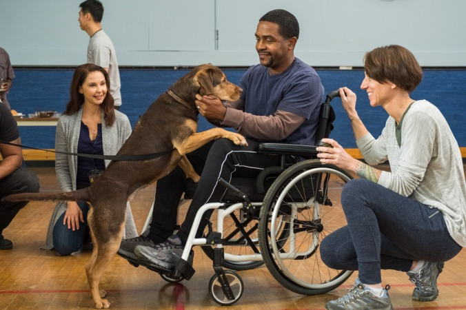 (l to r) Terri (Ashley Judd), Bella (Shelby) and two Vets (Rolando Boyce and Annie Nelson) in Columbia Pictures' A DOG'S WAY HOME.